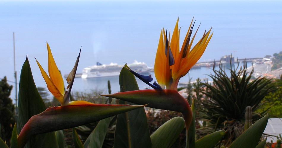 Norwegian Jewel, Funchal, Madera