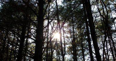 Garden of the Gods Forest
